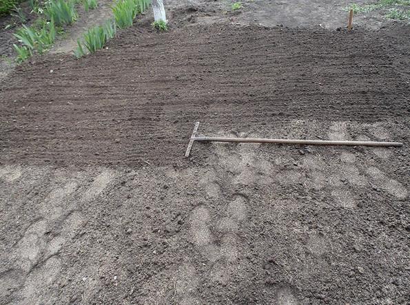 Как сделать газон без сорняков пошаговая инструкция