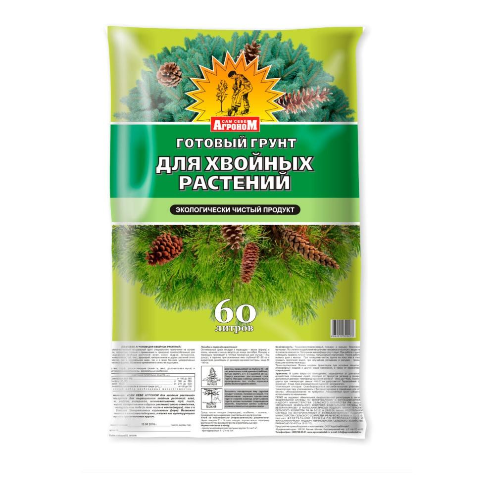 Выращивание туи из семян в домашних условиях