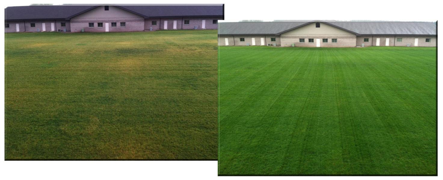 Регулярное внесение удобрений сделает газонную траву более яркой, сочной и густой