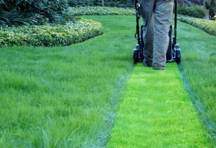 После того как лужайка будет подстрижена, ее нужно удобрить азотом