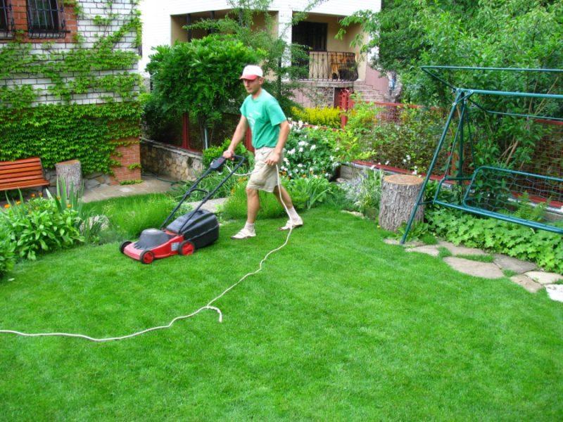 После стрижки газона следует обязательно убирать скошенную траву, чтобы не образовывалось проплешин и выпревания