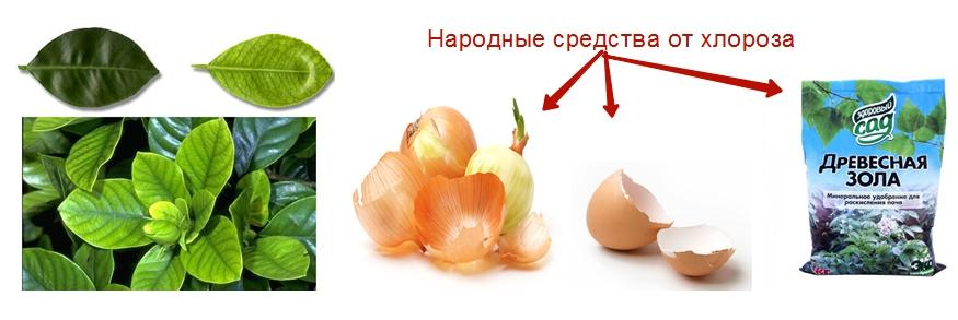Большой популярностью в народе пользуется древесная зола, отвар луковой шелухи, молотая яичная скорлупа