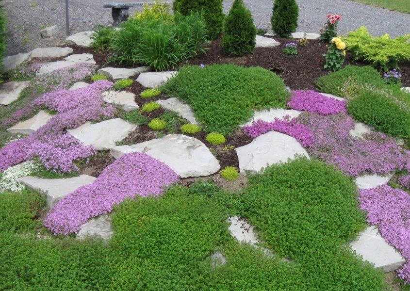 Яркие почвопокровники подчеркивают красоту камней