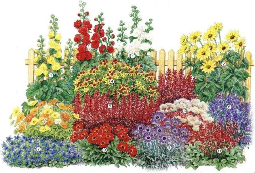 Цветник для полутени и солнечных площадок