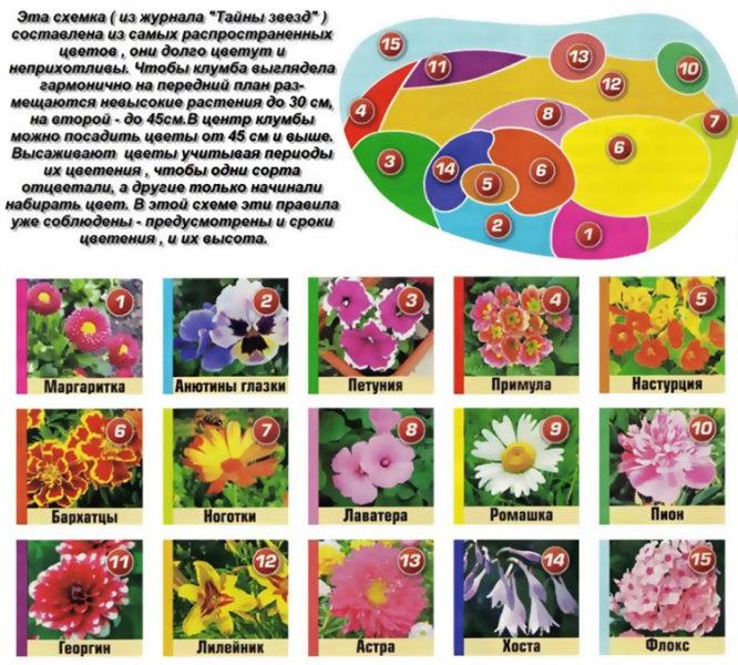 Главное для яркой цветочной клумбы — гармоничное сочетание растений и совместимость цветов