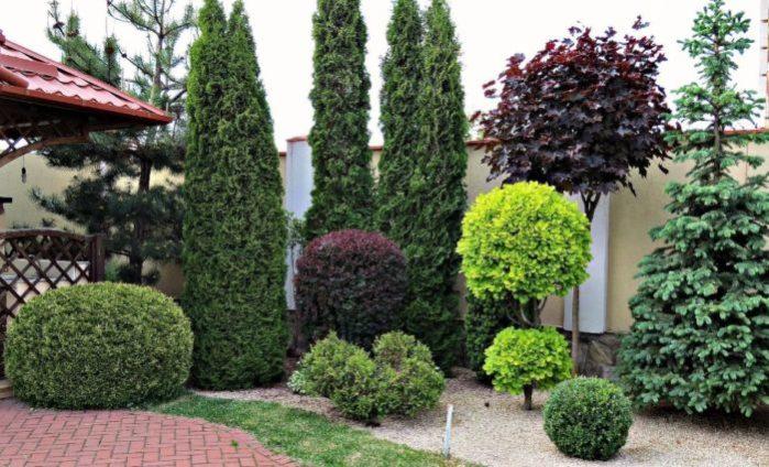 В комплексном озеленении этот вариант хорошо контрастирует с зеленью и притягивает к себе внимание