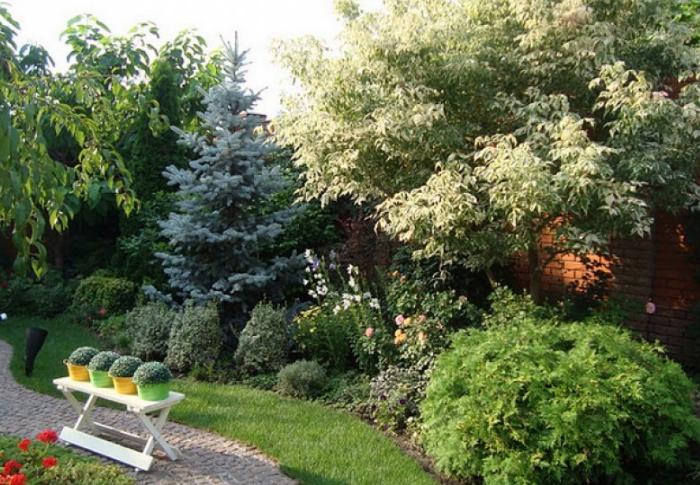 Комплексное озеленение с кленом в центре