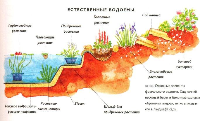 Каждому из видов растений требуется определенная глубина посадки, а также соответствующие условия обитания.