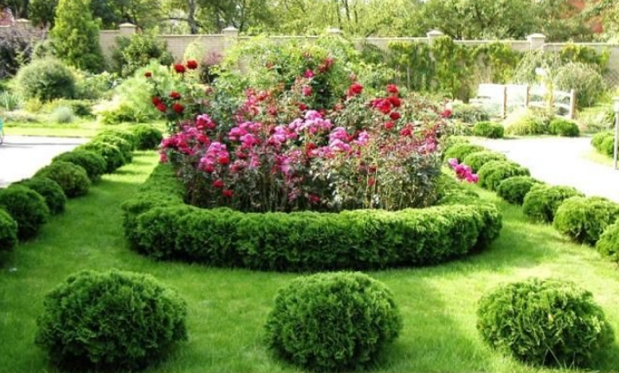 Обрамление клумб и цветочных композиций, может быть как сплошным, так и одиночным