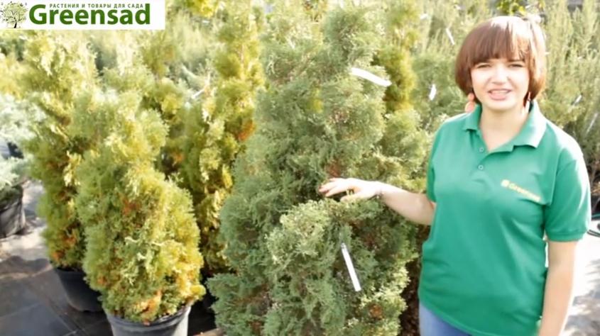 Специалисты садового центра Grеensad рассказали, что растения, выращенные в питомниках, отличаются высоким качеством и хорошо приживаются