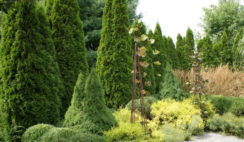 Комплексное озеленение территории