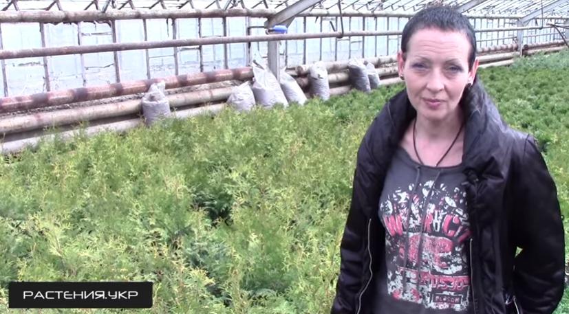 Специалист питомника «Агро-Флора» делится секретами посадки и выращивания туи
