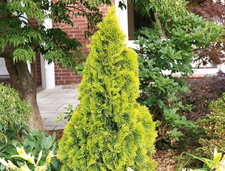 Одиночные деревья смотрятся отлично за счет яркой расцветки