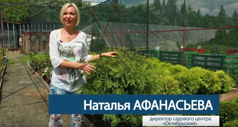 Директор садового центра «Октябрьский» рекомендует стричь тую, если вам нужна четкая овальная форма кроны
