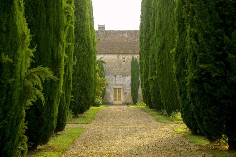 Взрослые деревья некоторых сортов могут достигать 8–12 м в высоту, например, туя сорта Columbia' Parsons