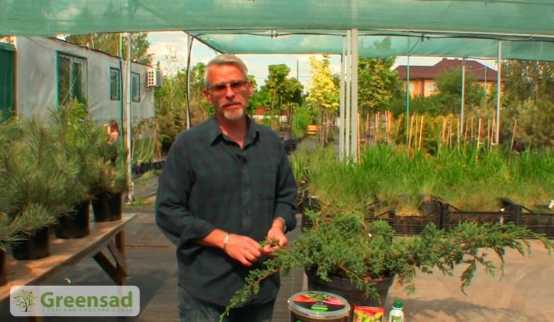 Эксперт садового центра «Гринсад» рекомендует по возможности вообще не подкармливать растения в осенний период, чтобы не вызвать образования молодых побегов, которые зимой погибают