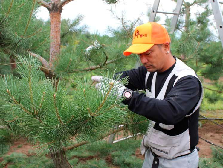 Чтобы дерево не заболело, проводите регулярную обработку химикатами