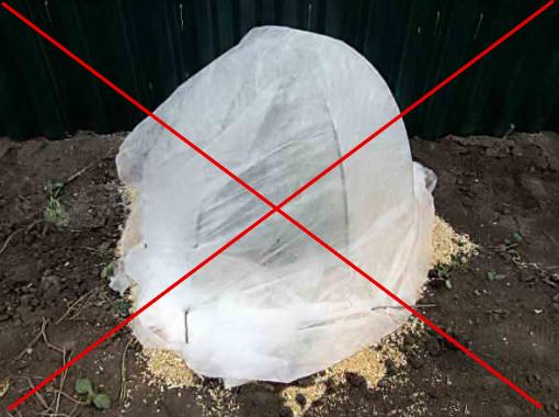 Крайне не рекомендуется оборачивать крону плотными тканями или полиэтиленом. Воздухонепроницаемый материал способствует появлению внутри укрытия парникового эффекта, что может привести к выпреванию хвои