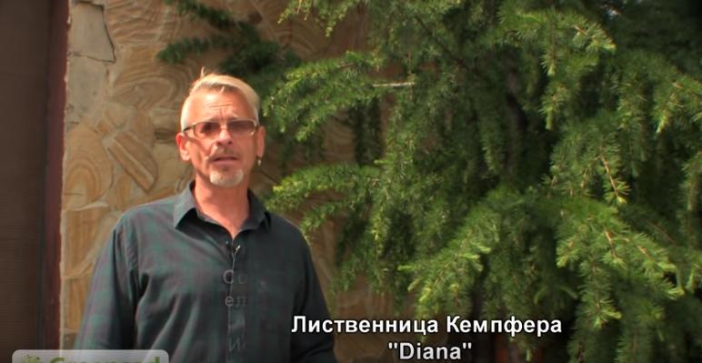 Эксперт от «Гринсад» советует, как сэкономить место на участке при посадке лиственниц