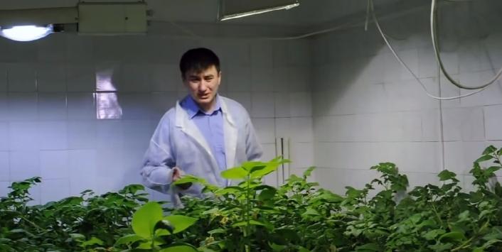При соблюдении агротехники сорт дает отличные урожаи