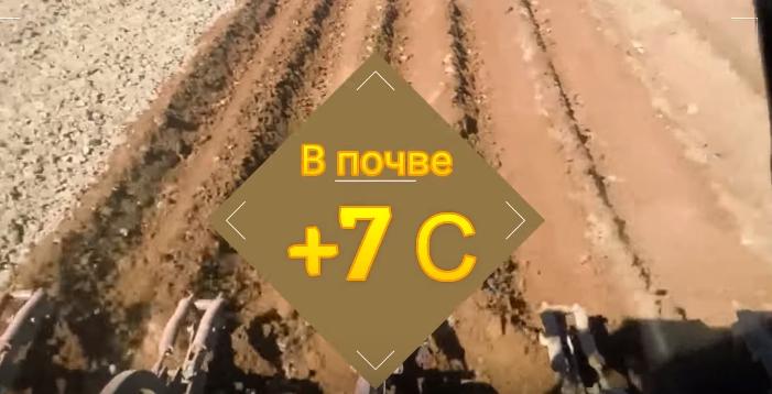 Нельзя высаживать картофель, если температура почвы на глубине 15 см ниже 7 градусов