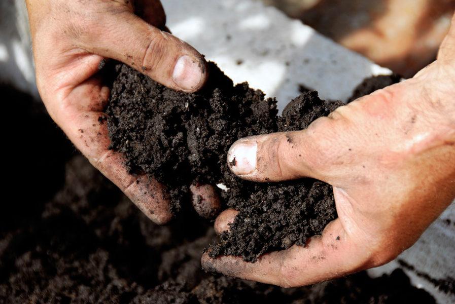 Богота предпочитает жирную и плодородную черноземную почву