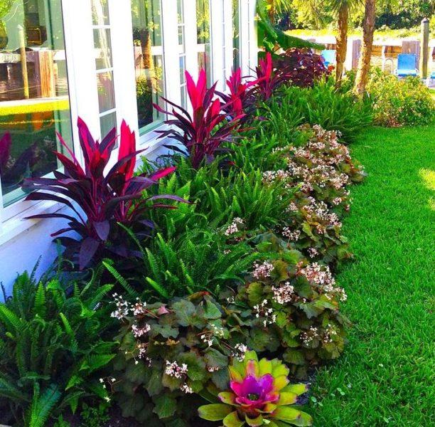 На протяжении всего сезона придают нарядность декоративно-лиственные растения, карликовые хвойные. На ярусных рабатках уделите внимание подбору по фактуре и цвету листа. На фото — односторонний цветник с папоротником и бегонией — создают контраст и «этажность»