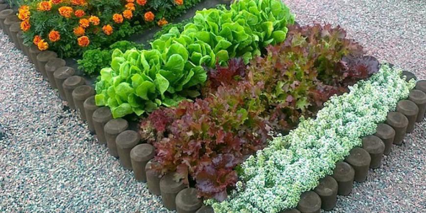 Практичные дачники выращивают на рабатках ароматные травы и пряную зелень. Чаще это шалфей, мята, базилик, иссоп, мелисса, лаванда. Также высаживают мангольд (листовая свёкла), котовник, чабрец, тысячелистник, листовые салаты. В конце лета и осенью шикарно выглядит физалис