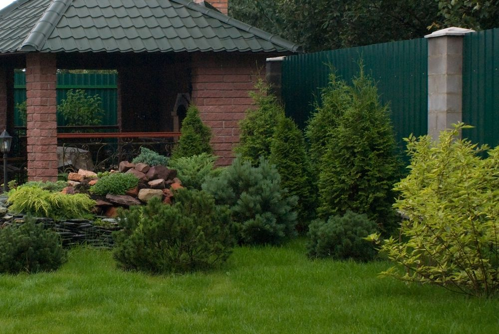 Только несколько сосен и газонная трава. Такой подход открывает красоту каждого дерева в отдельности, а правильная обрезка и формирование создадут настоящие шедевры