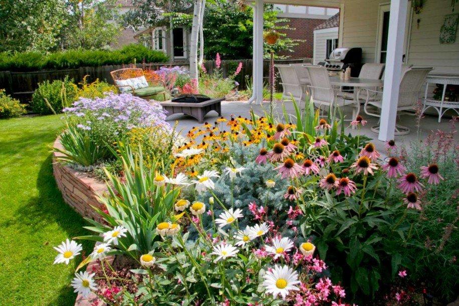 Ирисы, садовая ромашка, эхинацея пурпурная, водосборник/аквилегия — неприхотливые многолетники