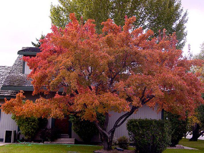 Особенно эффектны одиночные деревья осенью