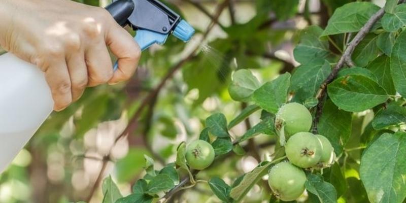 Цитоспороз яблони