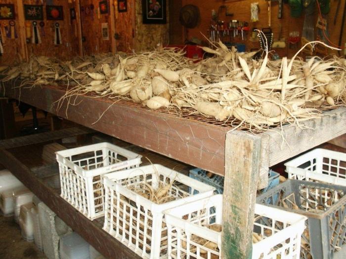 Лучшая емкость для хранения в погребе — ящики: можно хранить корнеплоды с земляным комом или просто вымытые и высушенные