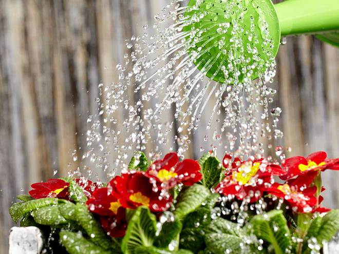 В засушливое лето исключить увядание и отмирание листвы помогут регулярные поливы