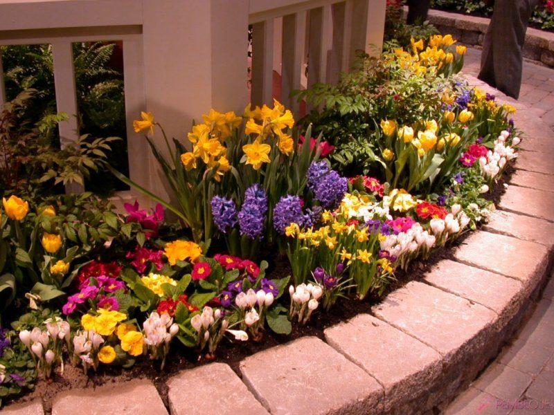 Весенняя рабатка: примула, тюльпаны, крокусы, нарциссы