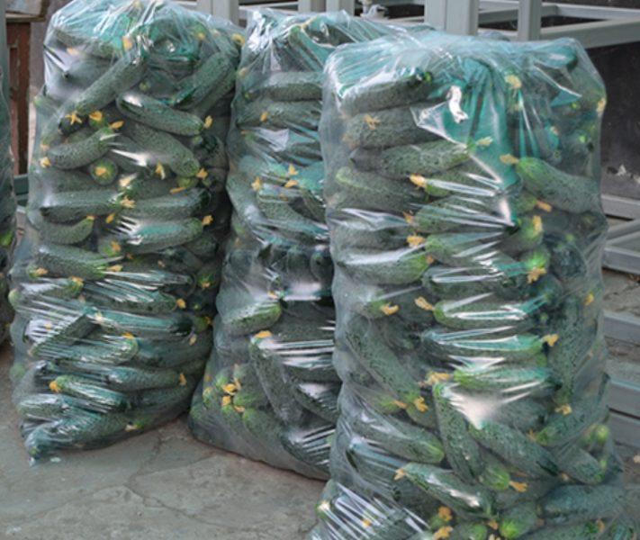 Огурцы сорта Лютояр отлично хранятся несколько дней и прекрасно переносят транспортировку, поэтому их часто выращивают на продажу
