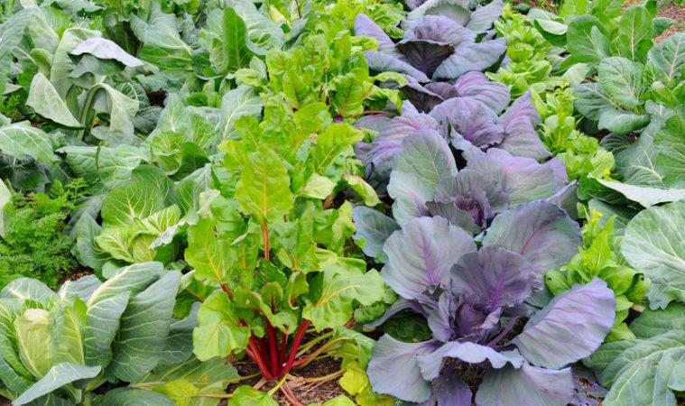Совместные посадки подходящих культур благотворно влияют на урожай