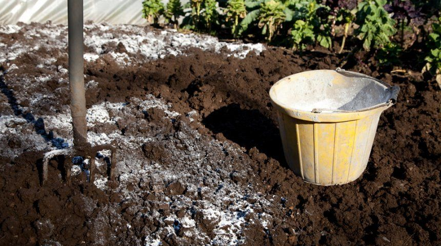 Раз в 5 лет почву следует раскислять внесением доломитовой муки или извести – пушонки