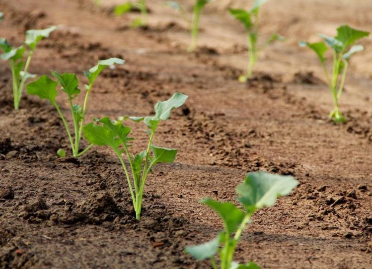 Обеспечьте достаточно места каждому растению, не загущайте посадки