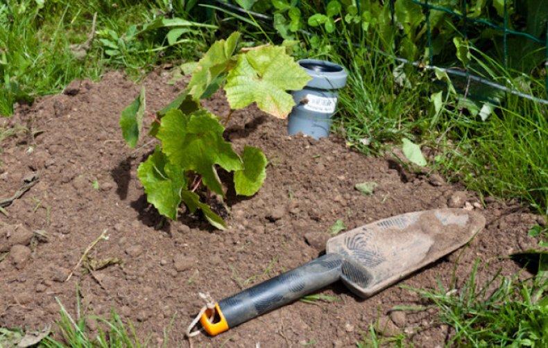 При перекопке почвы уничтожаются личинки насекомых-вредителей