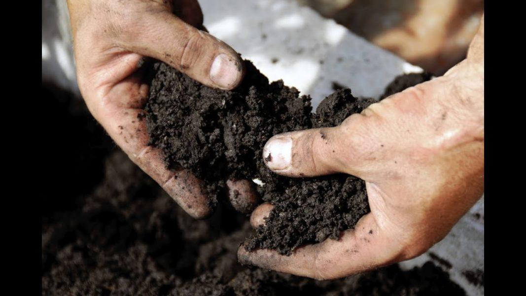 Разрыхленный Чернозем идеален для выращивания клубники