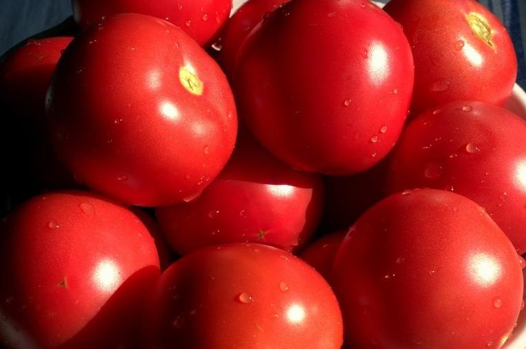 Плоды у этого сорта яркие и имеют правильную форму