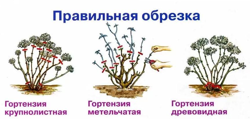 Схема работ для разных видов