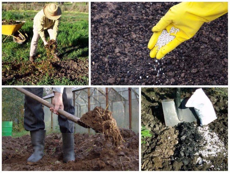 Чтобы получить достойный урожай, землю нужно удобрять