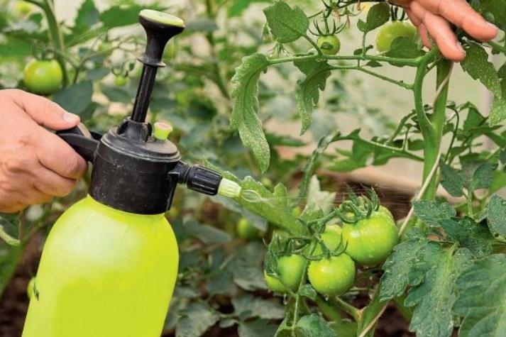 можно ли сывороткой поливать растения
