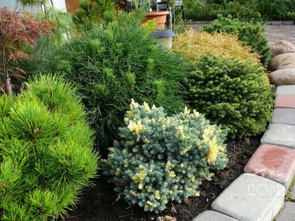 При посадке в составе ландшафтных композиций, расстояние между низкорослыми растениями должно быть не меньше 1,5 м, между высокими деревьями, около 5 м