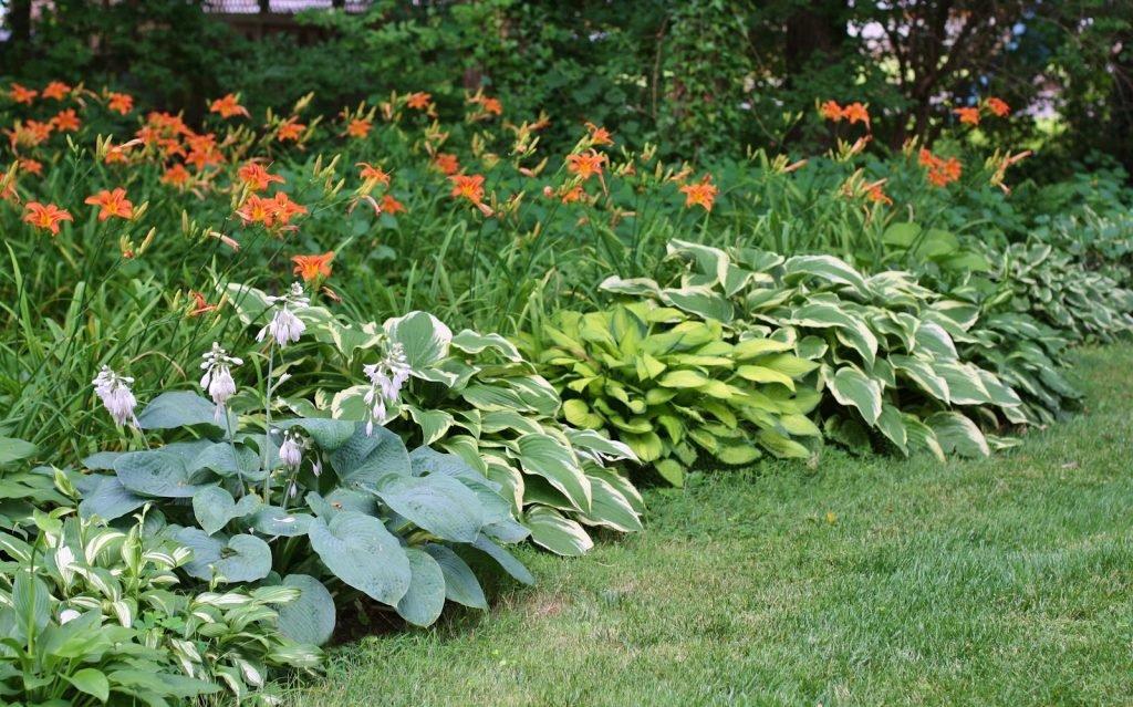 Односторонний цветник с хостами и лилейниками