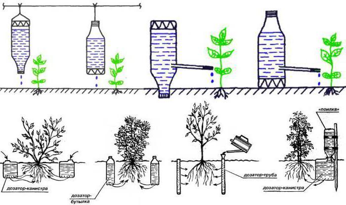 Целенаправленный полив основной культуры повышает урожайность в разы