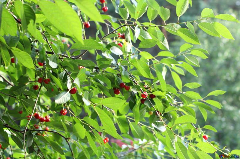 Цвета плодов отличаются в зависимости от высаженного сорта