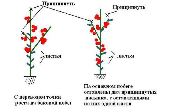 Схема правильного прищипывания томатов
